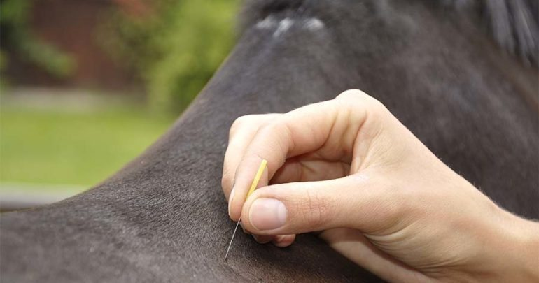 Equine Acupuncture Phoenix AZ